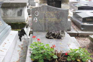 Cats at Montmartre Cemetery, Paris